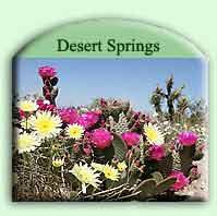 desert-spring-th