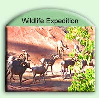 wildlife-expedition-yellowstone