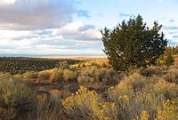 Hochwüste in Zentral Oregon