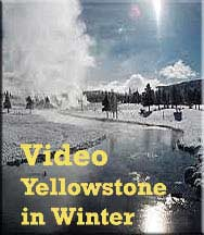 Yellowstone in Winter movie