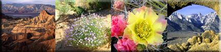 bloomin-desert-stripe-colla