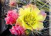 Blühende Wüsten in Kalifornien