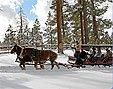 Pferde-Schlittenfahrt