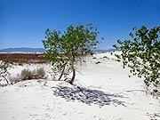 White Sands National Mon.