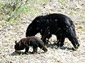 Wildtiere - Bären, Elche, Walfische