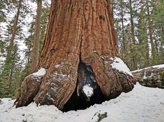 Winter im Sequoia National Park